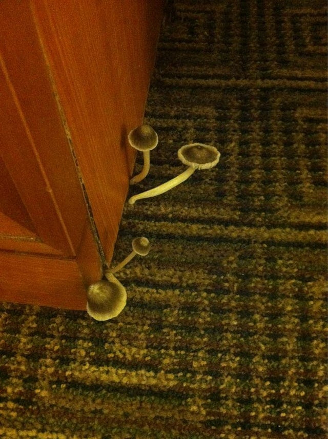 Подборка неприятных сюрпризов в гостиницах