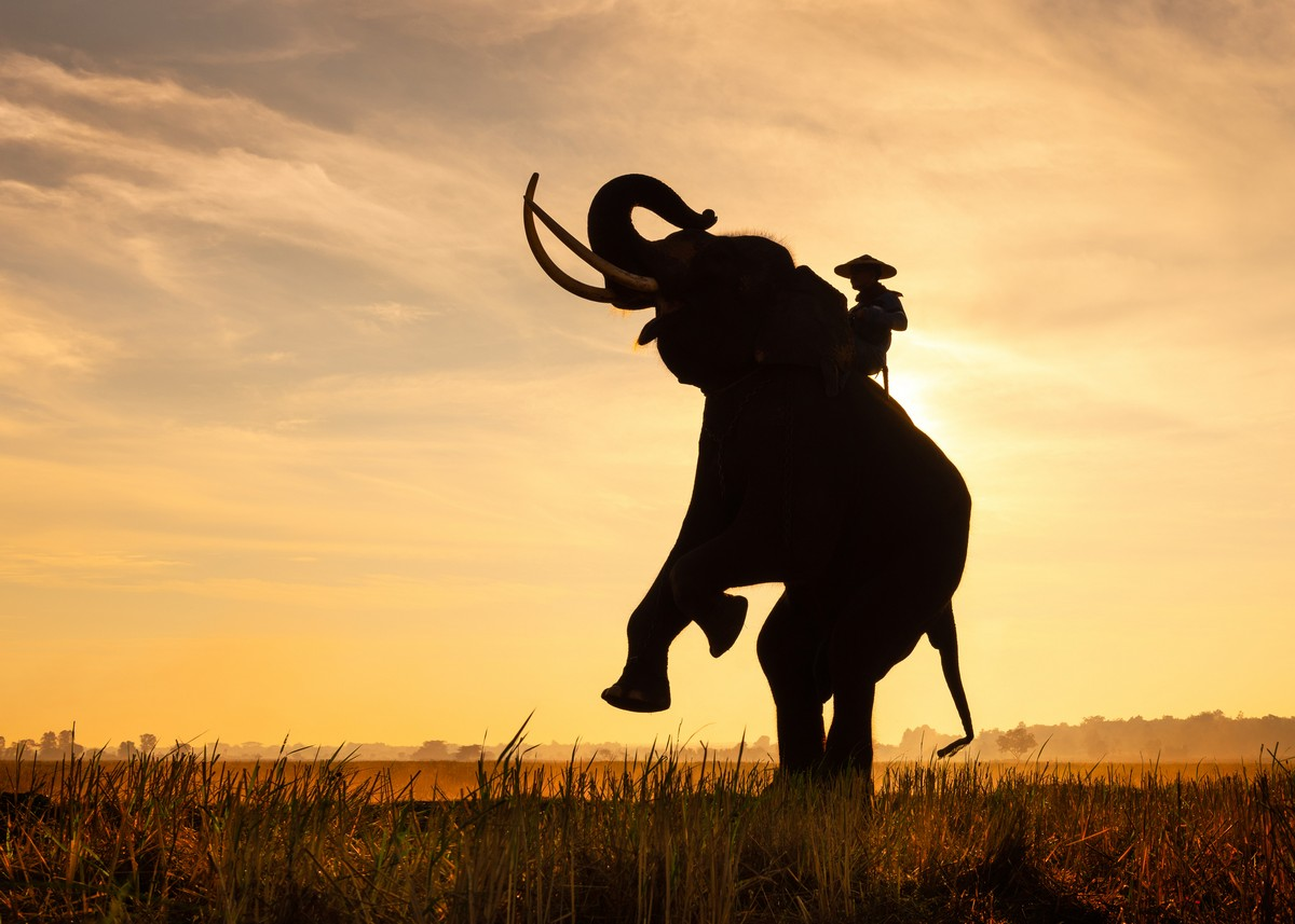 Слоны и закат в Таиланде
