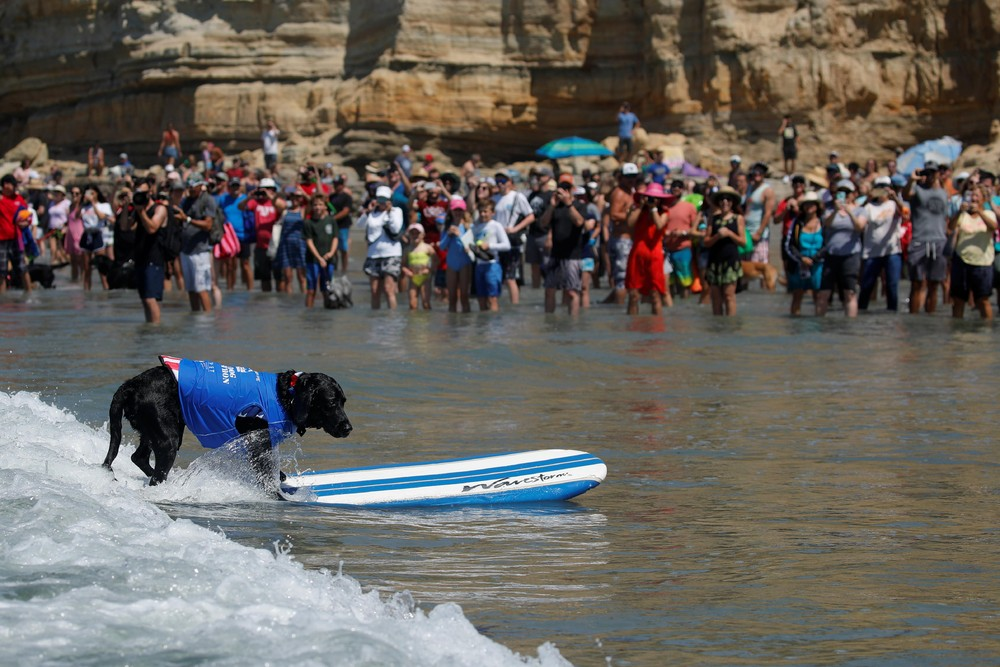 Соревнования по серфингу среди собак Top Surf Dog 2019