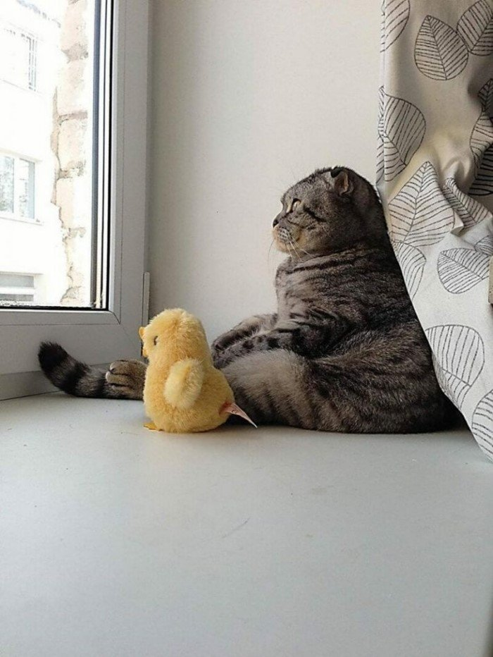 Забавные снимки с животными, сделанные в нужный момент