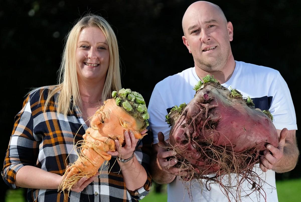 Фестиваль урожая Harrogate Flower Show в Великобритании