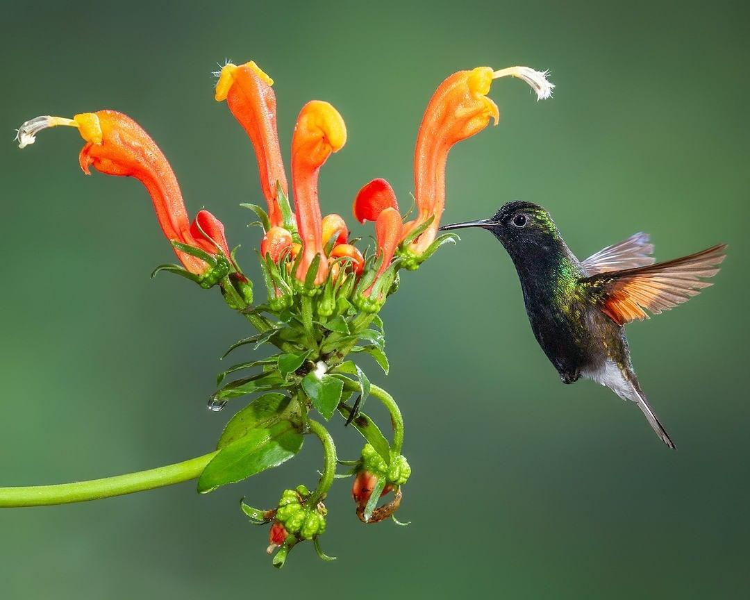 Фотографии красивых птиц от Джалила Эль Харрара