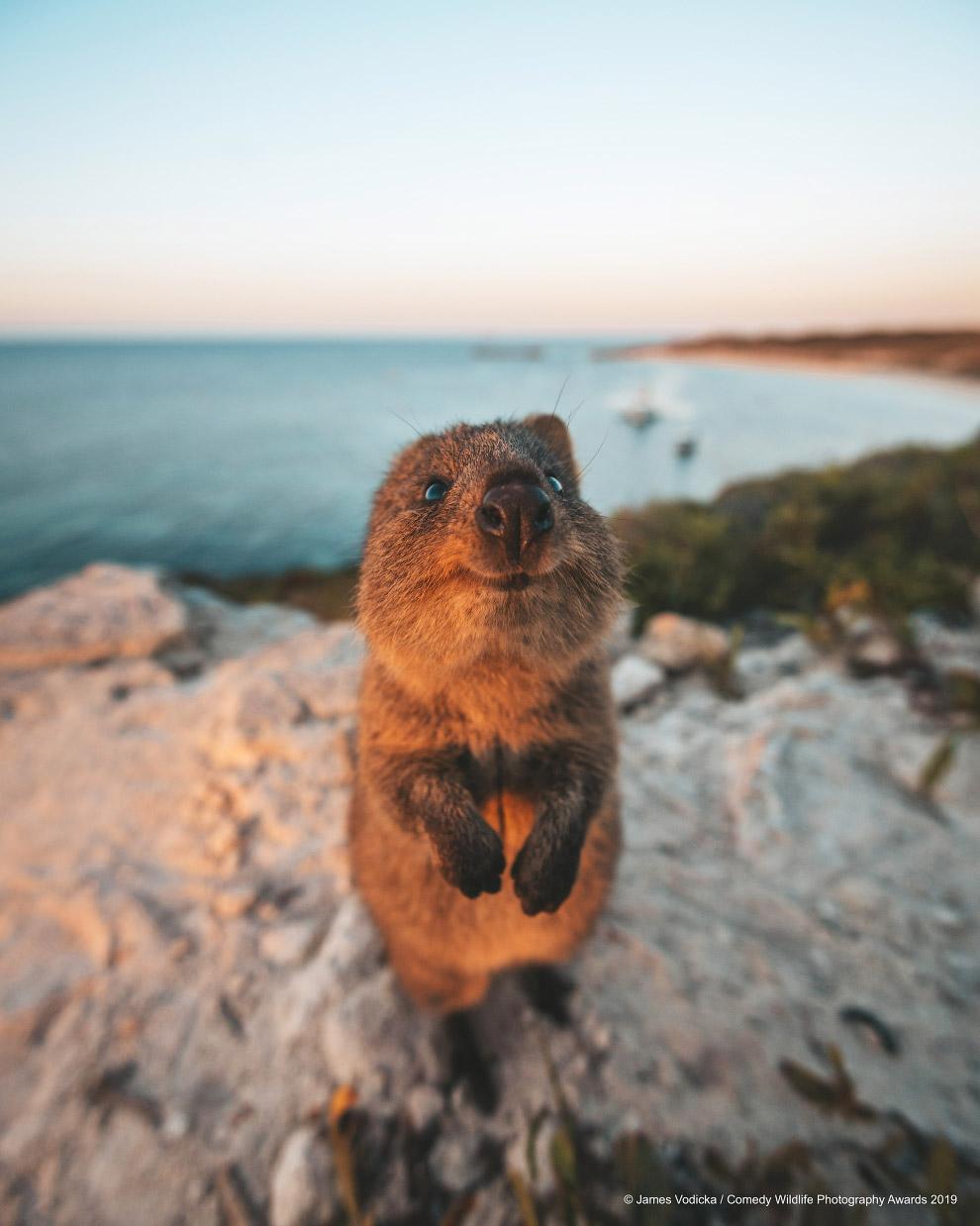 Снимки финалистов фотоконкурса Comedy Wildlife Photography Awards 2019
