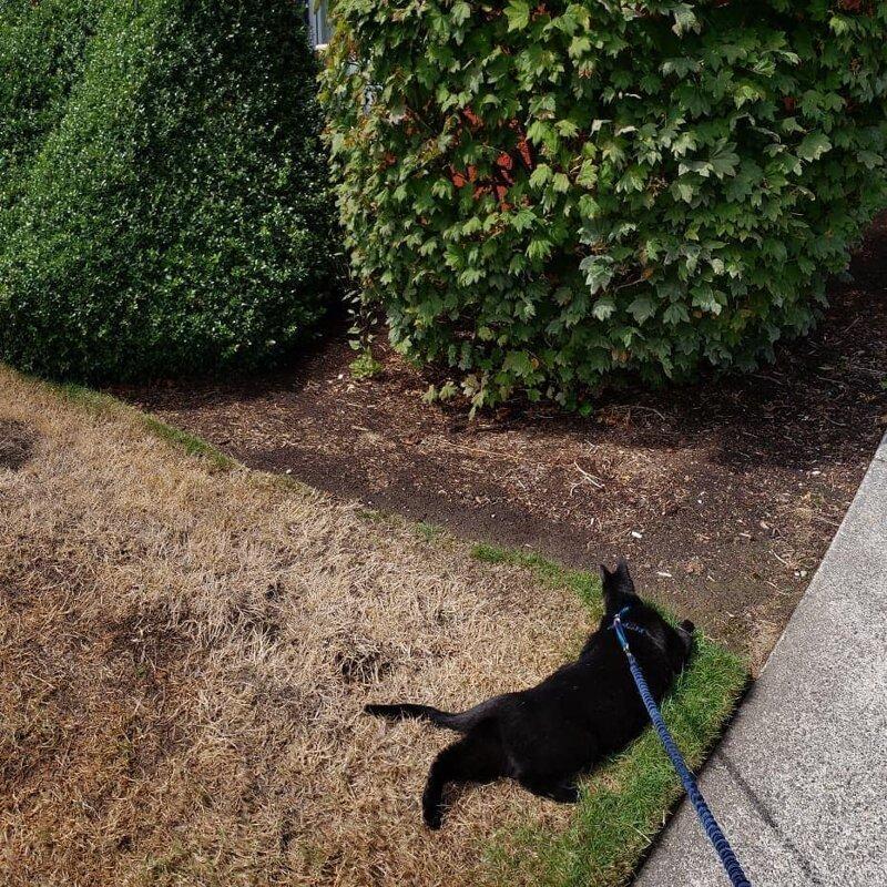 Превращения животных на неудачных панорамных снимках