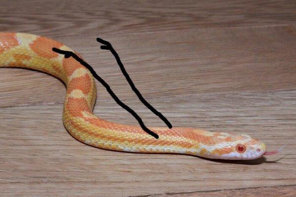 А что, если пририсовать змеям руки?