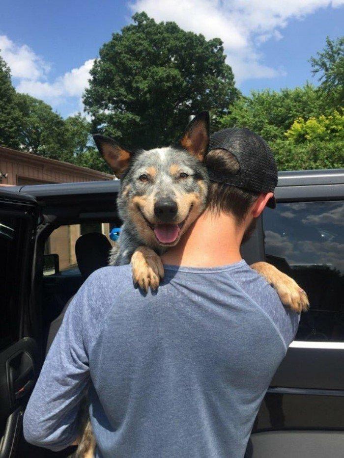 Счастливые мордахи собак, которых забрали из приюта