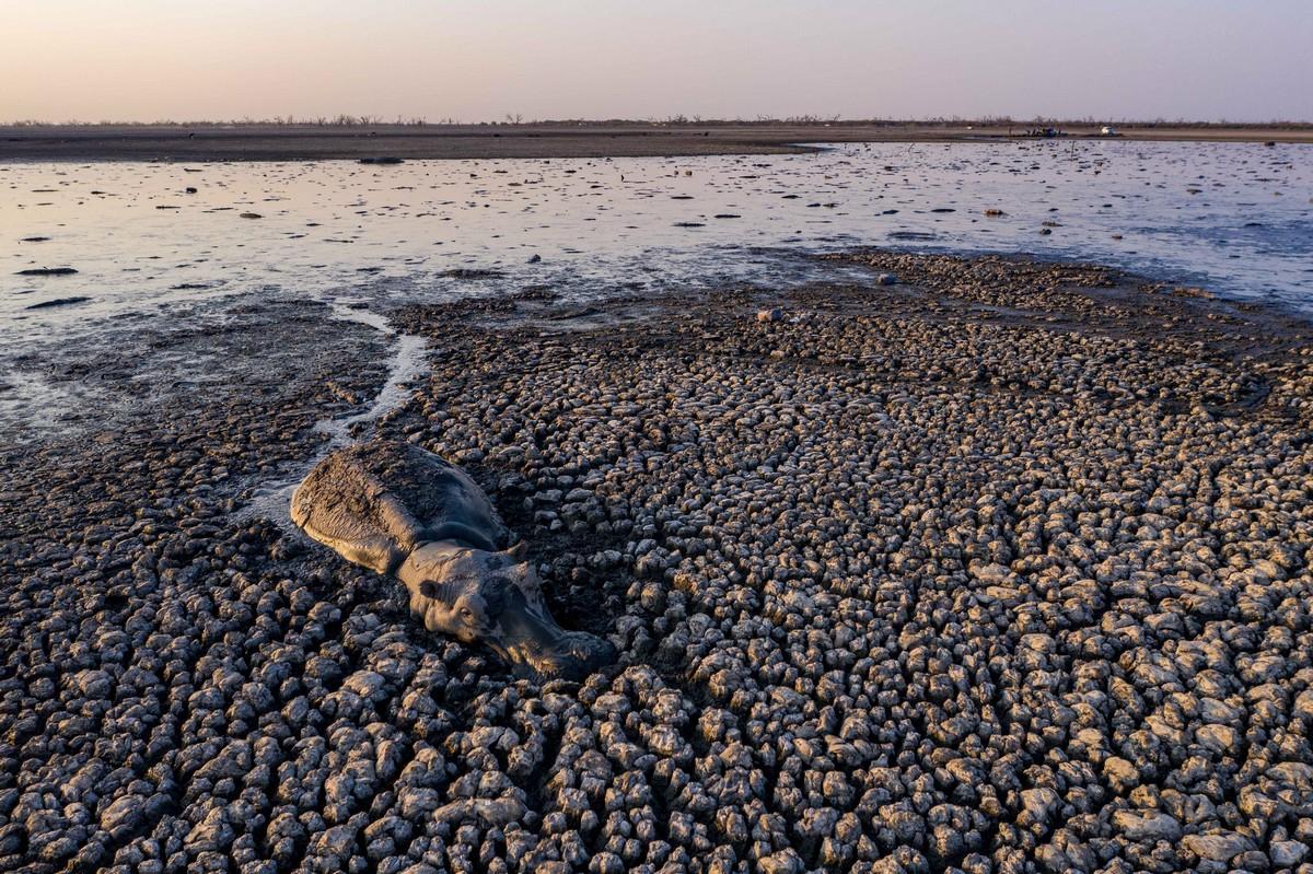 Высохшее озеро Нгами продолжает убивать животных