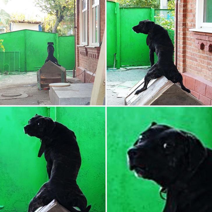Что делают домашние животные, пока их никто не видит