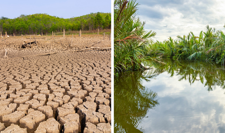 Что может произойти с нашей планетой, после исчезновения тропических лесов Амазонки