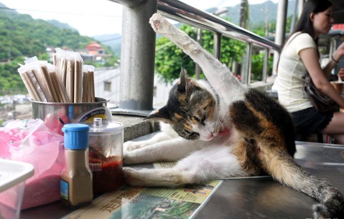 Кошки спасли деревню в Тайване от запустения