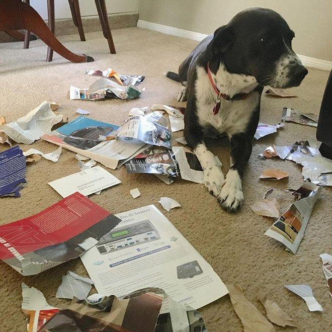 Эти собаки провинились и знают об этом