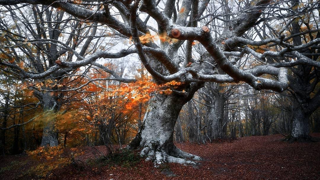 Красота лесов на снимках Мануэло Бечекко