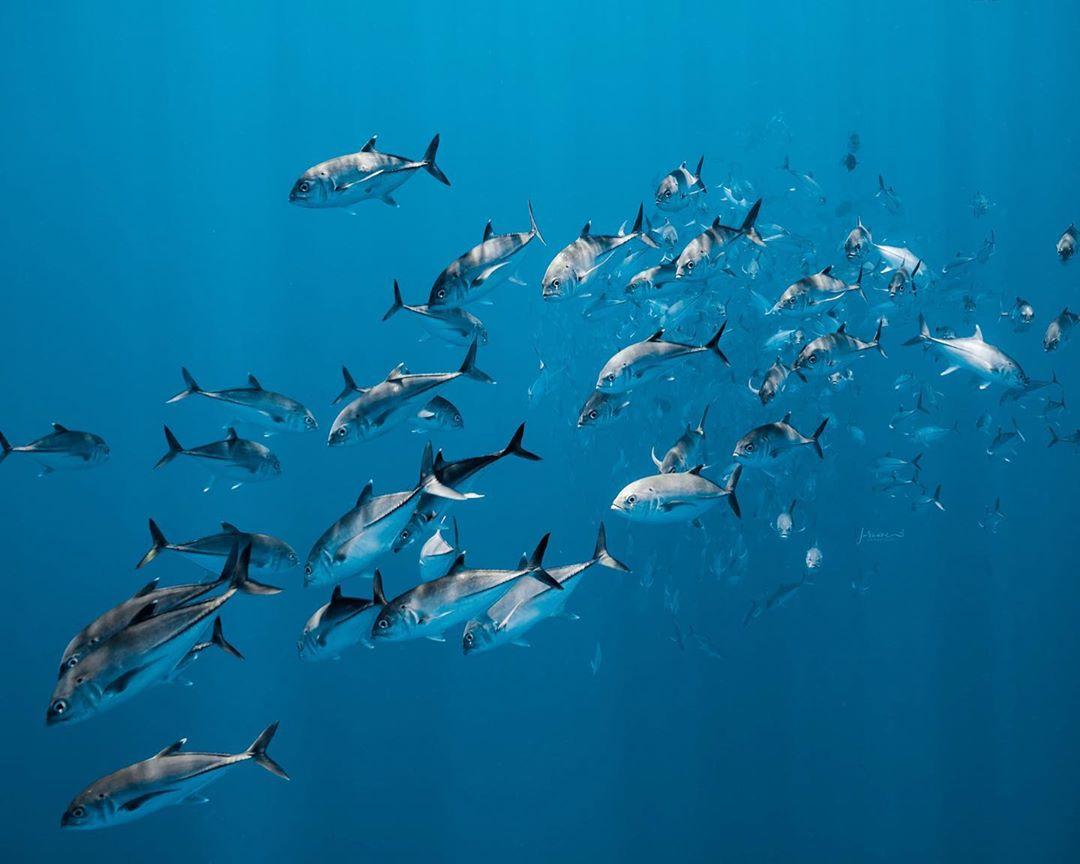 Удивительные подводные снимки от Жасмин Кэри