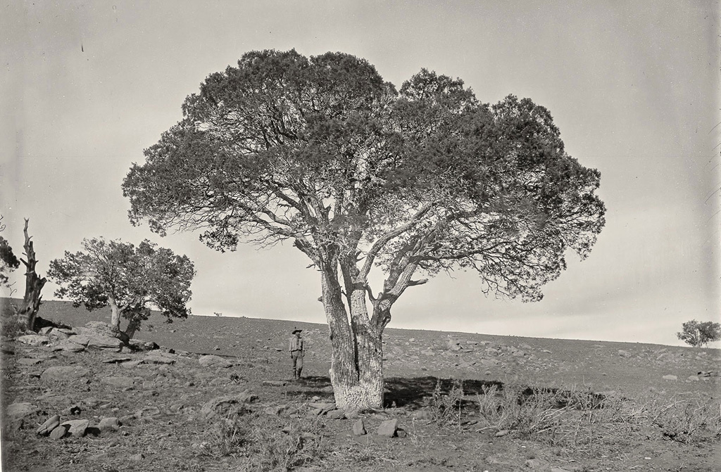 Природа Дикого Запада 150 лет назад на снимках