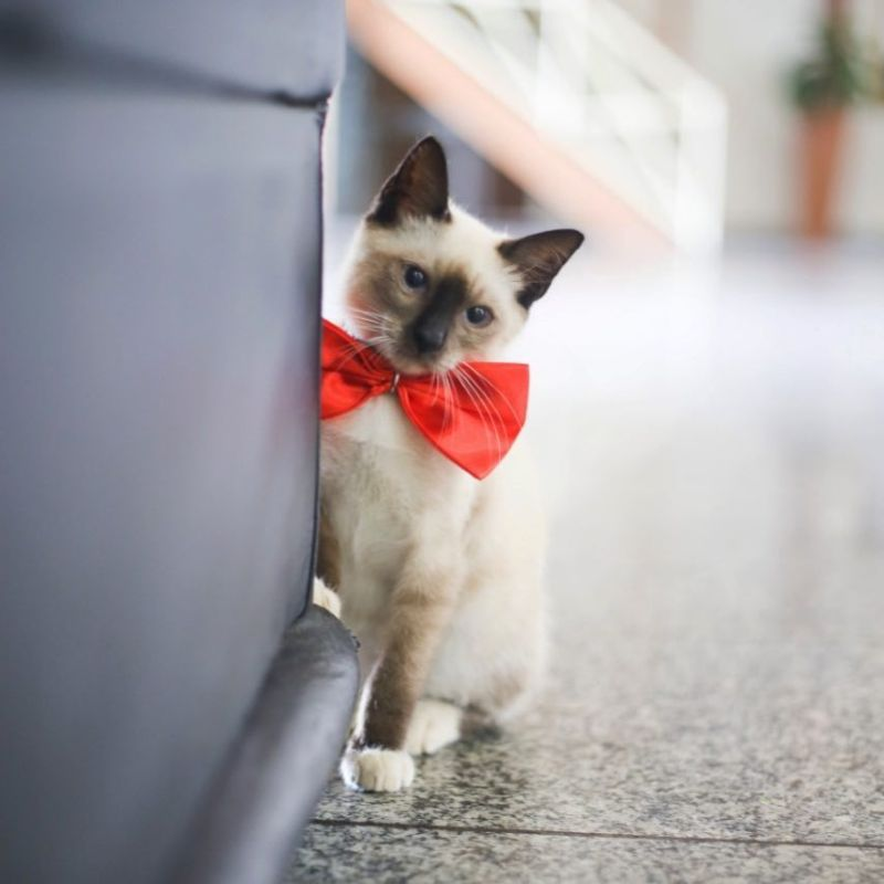 Настоящий кот-адвокат, который работает в ассоциации юристов