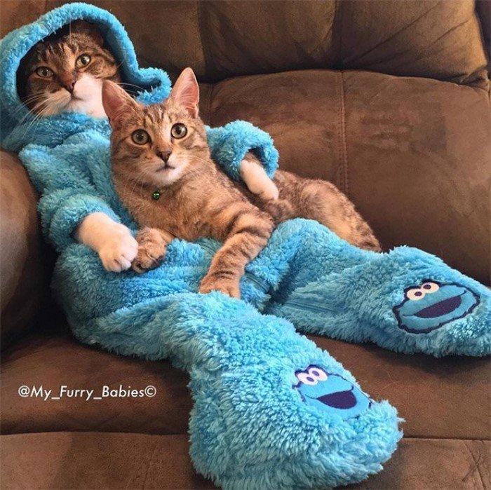 Очаровательный кот по кличке Джоуи и пижамное настроение