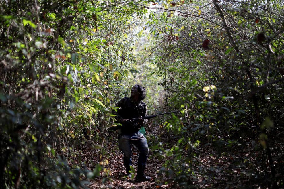 Стражи джунглей Амазонки против незаконных рубок леса