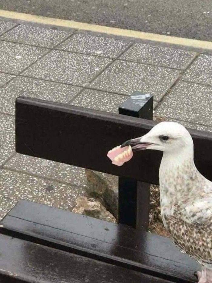 Животные иногда выглядят пугающе на снимках