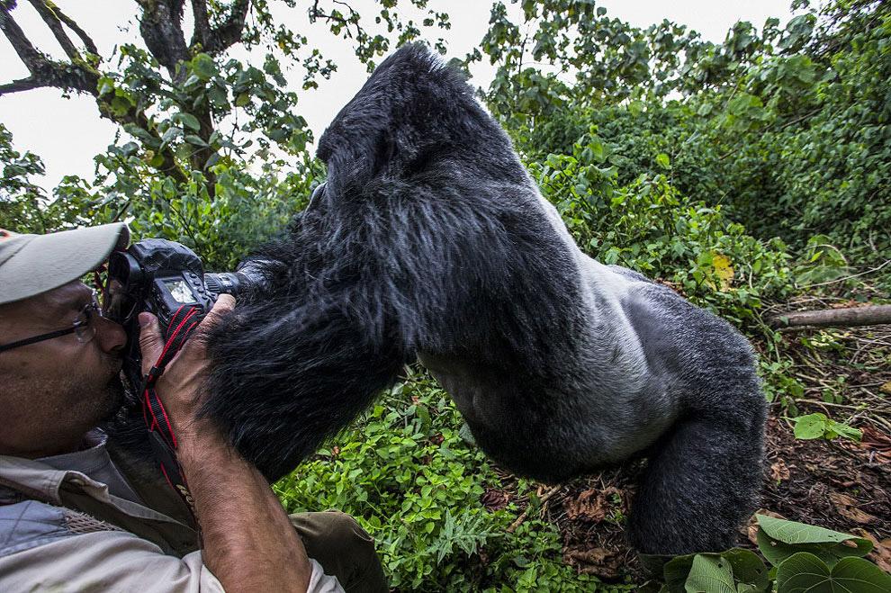 Фотографы в тесном контакте с животным миром