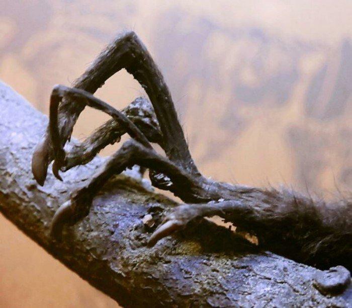 Самые длинные, тонкие, плоские и странные рекордсмены среди животных