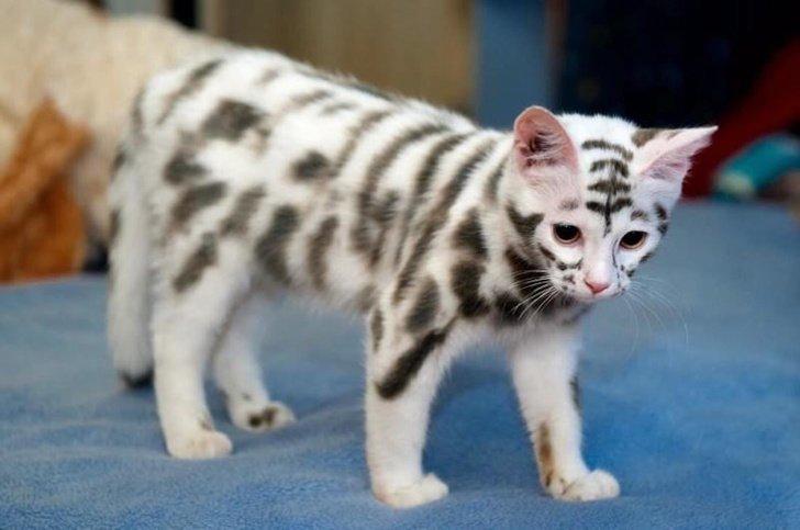 Домашние животные с поистине уникальной внешностью