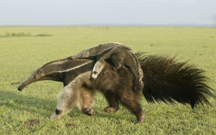 Неудобные факты о животных, о которых вы не слышали