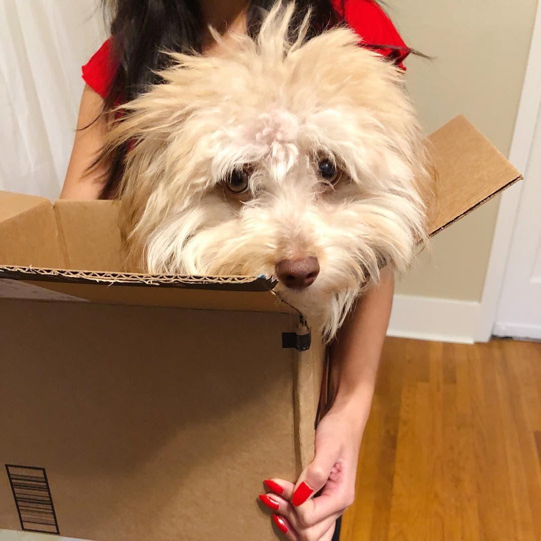 Нори - пес с человеческой мордой