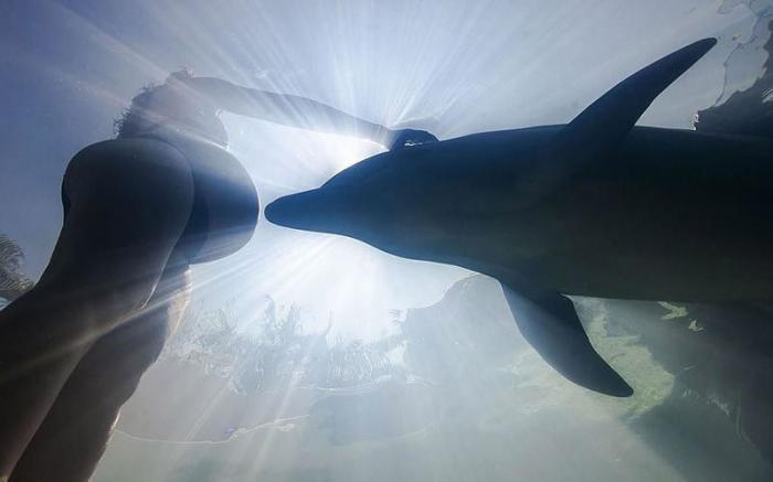 Дельфины – уникальные жители нашей Земли