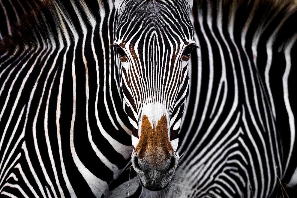 Победители природного фотоконкурса Nature Conservancy 2019