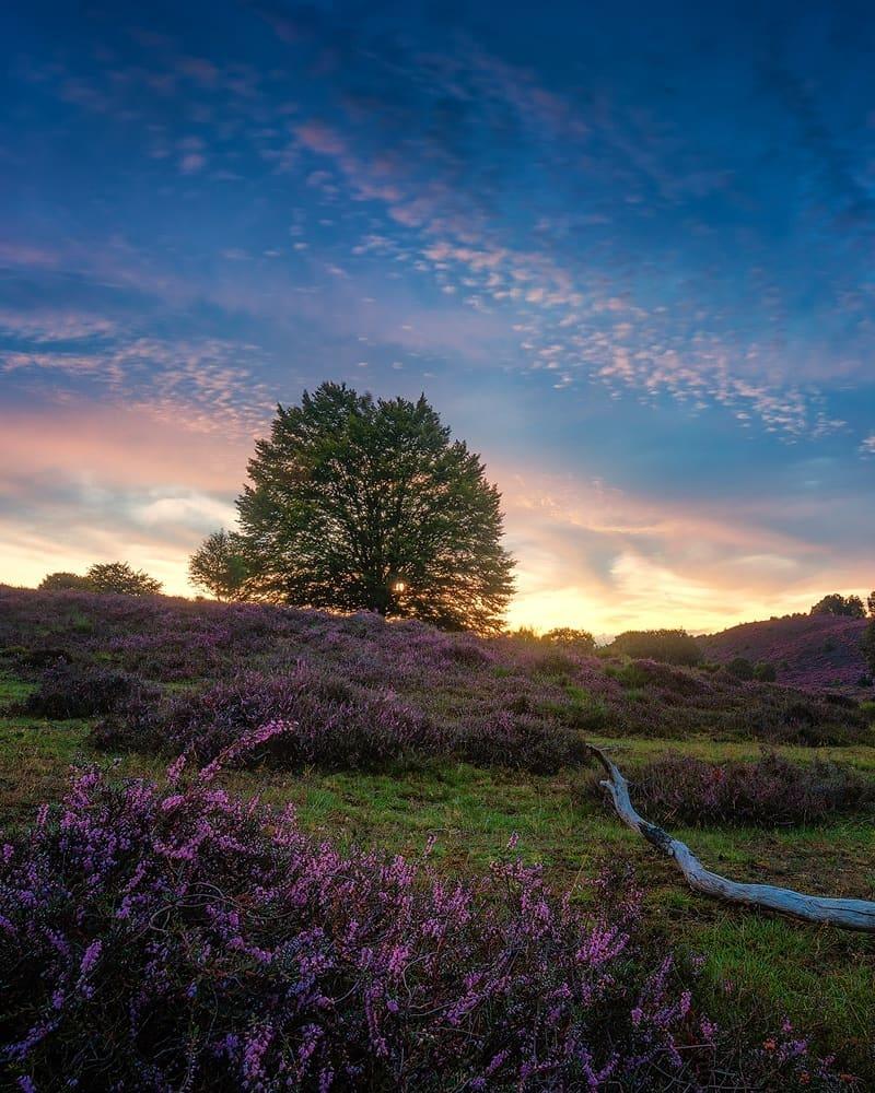 Сказочные лесные снимки от Мартина Подта