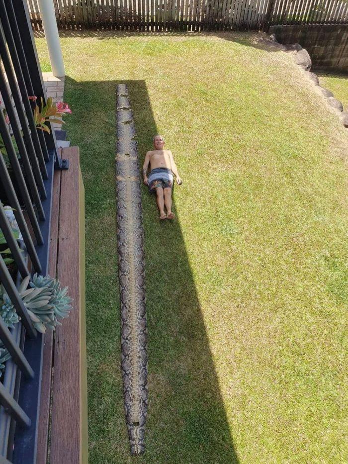 Австралиец нашел кожу 7-метрового питона