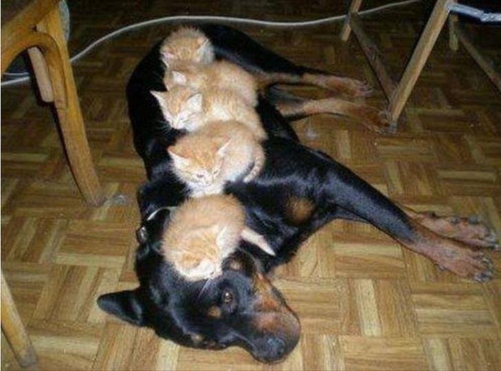 Наглые коты выражают своё превосходство