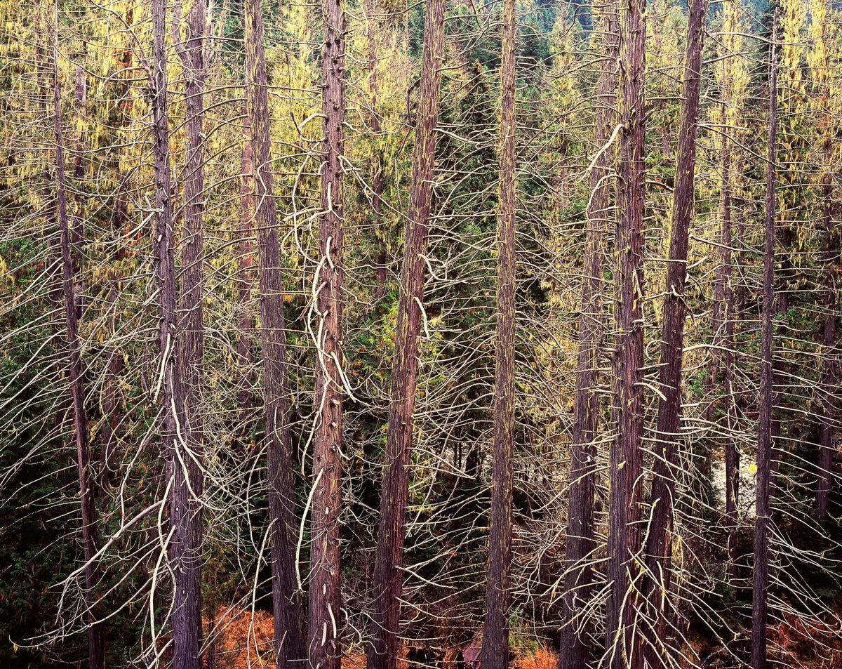 Природа в объективе Кристофера Бёркетта