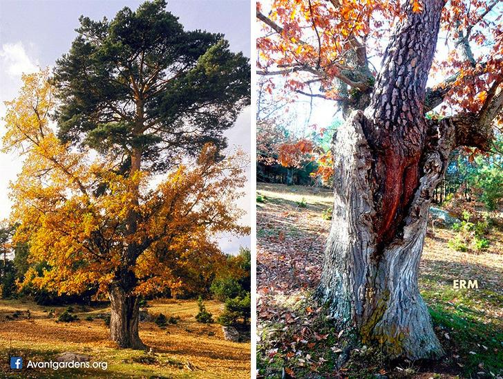 Удивительные фотографии о природе