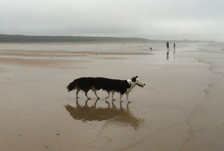 Забавные неудавшиеся панорамные снимки с животными