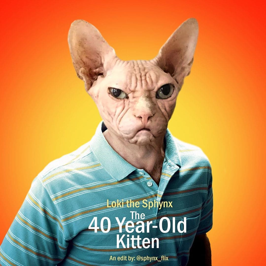 Фотограф вставляет снимки своего кота в постеры популярных фильмов