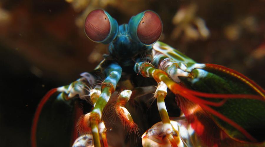 Инопланетные создания, которые живут рядом с нами