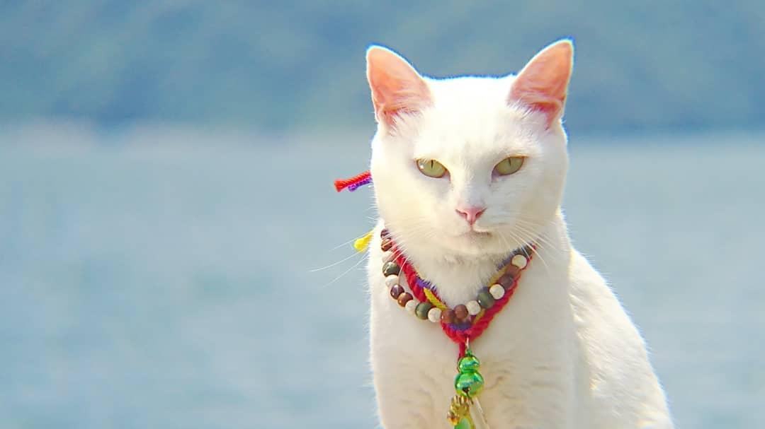 Необычный кошачий храм в Японии