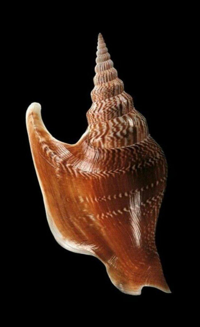Разные раковины моллюсков, которые никого не оставят равнодушным
