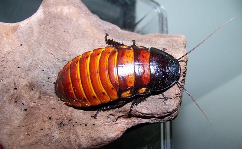 Самые сильные из насекомых в мире