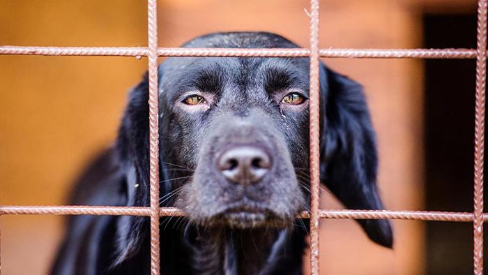 Почему животных черного окраса реже забирают из приютов