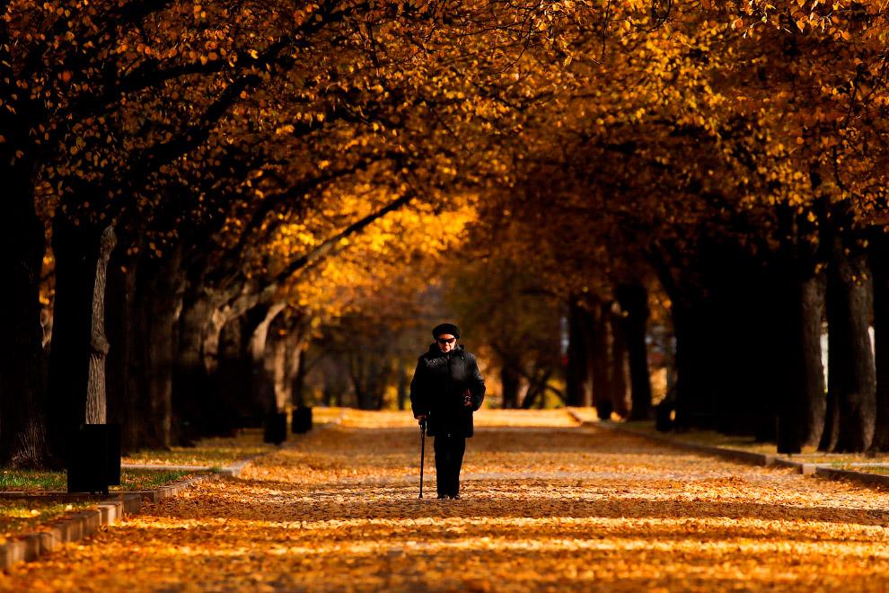 Последние пейзажи золотой осени на снимках