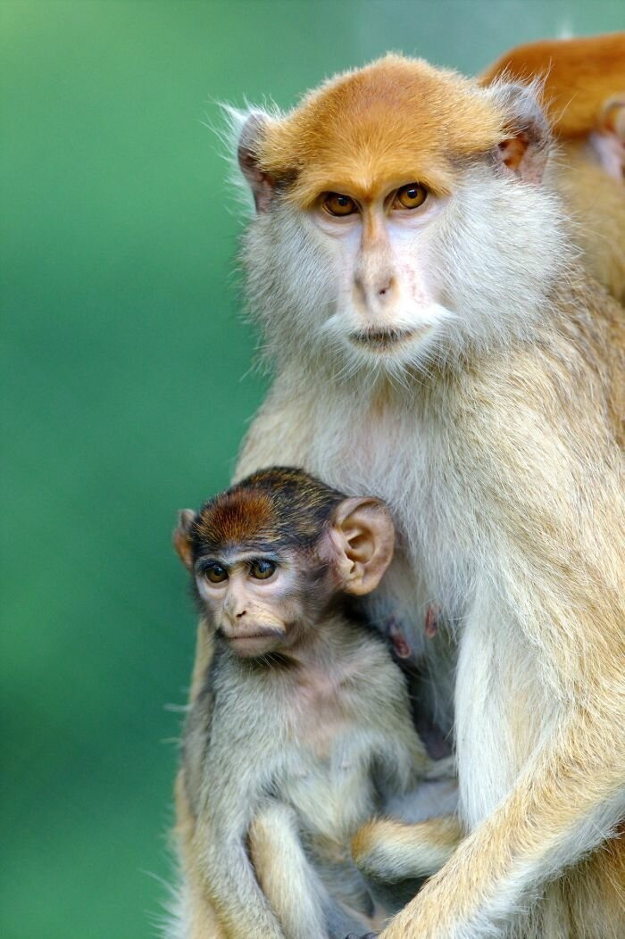 30 трогательных снимков о том, как животные умеют любить