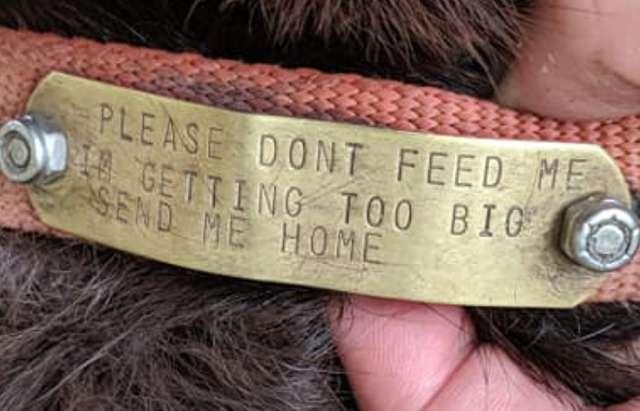 Люди подкармливали собаку на улице, а потом нашли надпись на её ошейнике