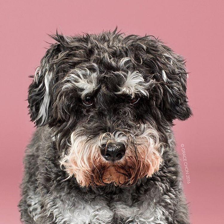 Собаки до и после стрижки на снимках
