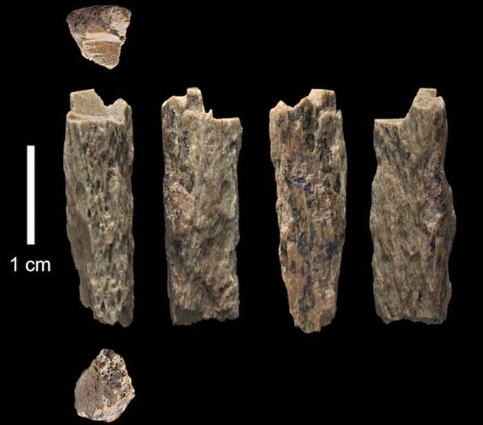 Интересные выводы ученых после изучения древней ДНК