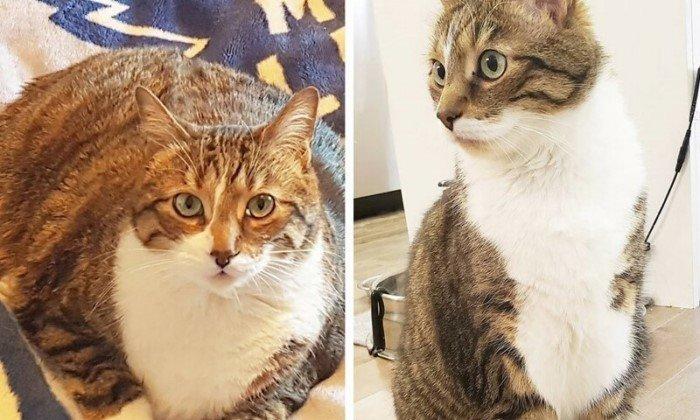 Животные до и после того, как они превратились в стройнях