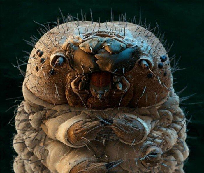 Как выглядят вблизи головы и лица насекомых