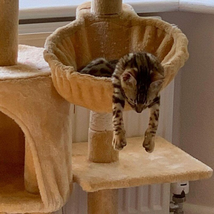 Необычные места для сна и странные позы домашних животных
