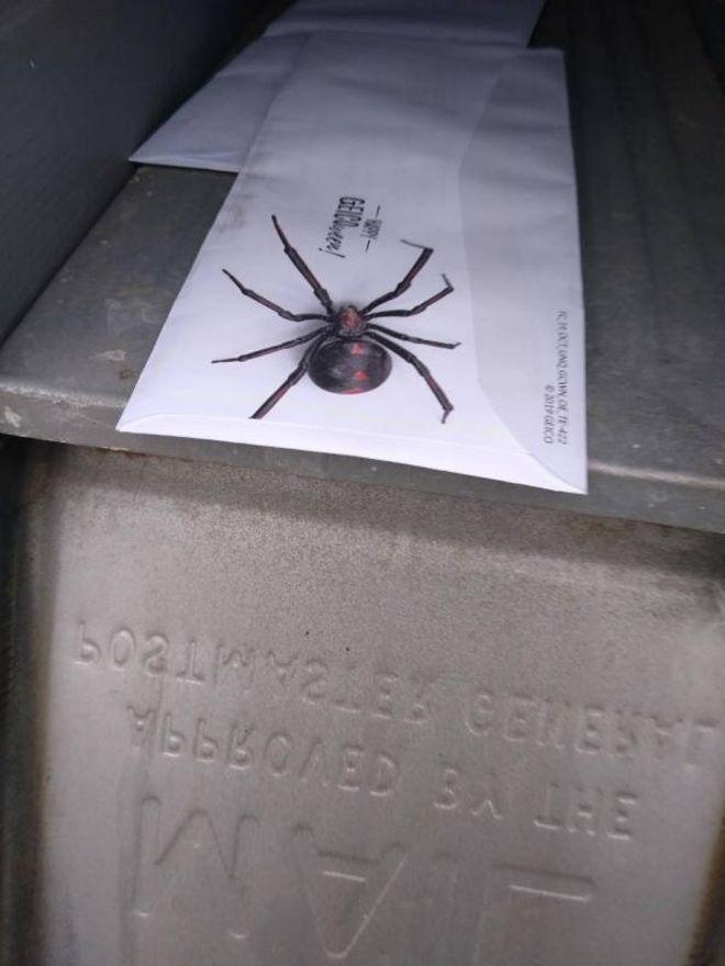 Снимки с пауками, от которых арахнофобы будут в ужасе